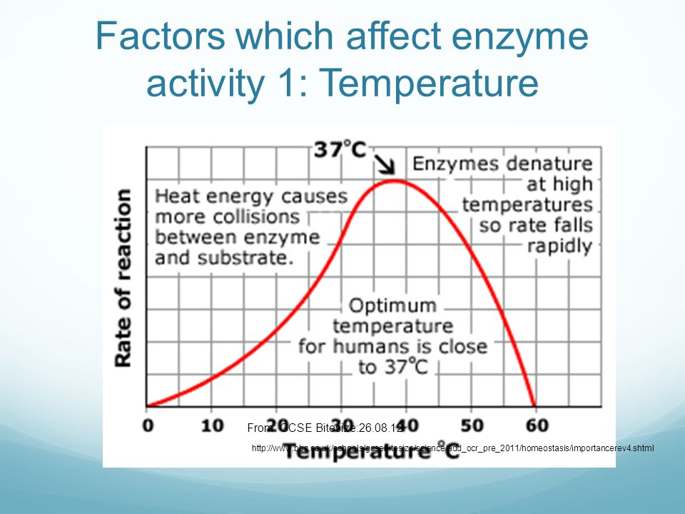 gcse biology enzymes coursework Extracts from this document introduction biology coursework: enzymes by kerry douglas investigate the effect of temperature on the action of the enzyme amylase.