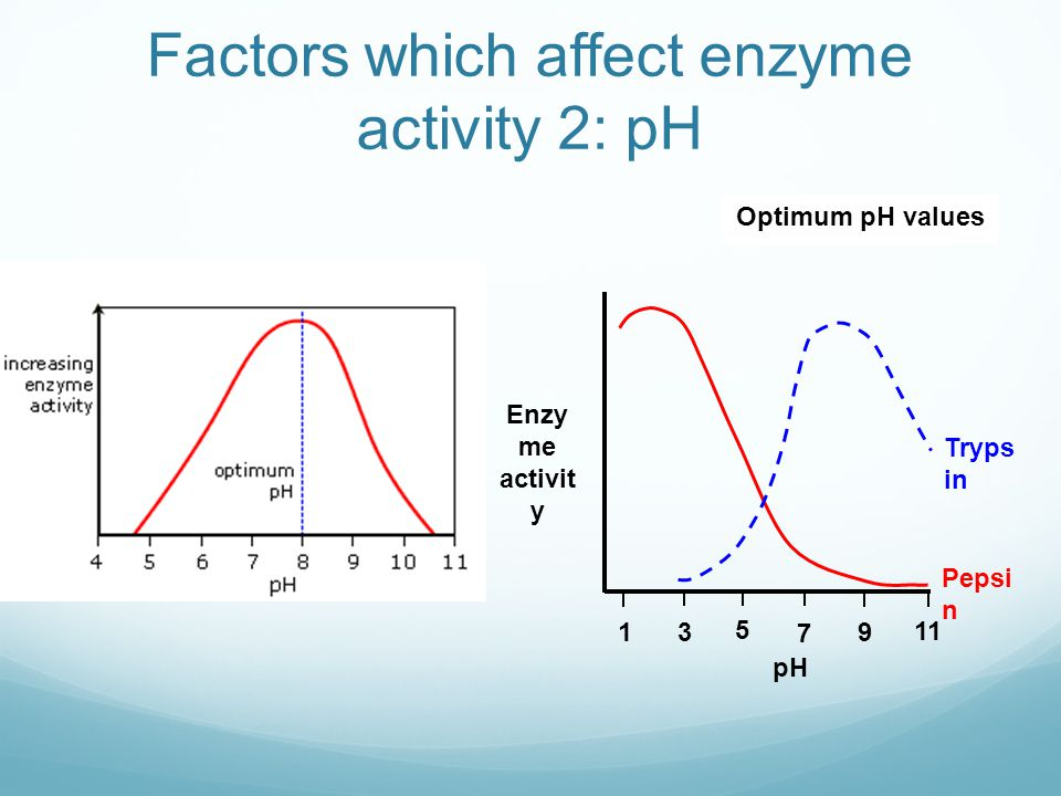 lab report on factors influencing enzyme activity Lab report room no: fe e309 experiment no: 9 title: factors affecting enzyme function the absorbance ratings can be used to determine the enzyme activity.