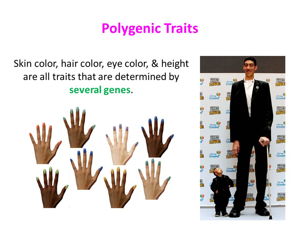 7 Polygenic Traits Skin color, hair color, eye color, & height are all  traits that are determined by several genes.