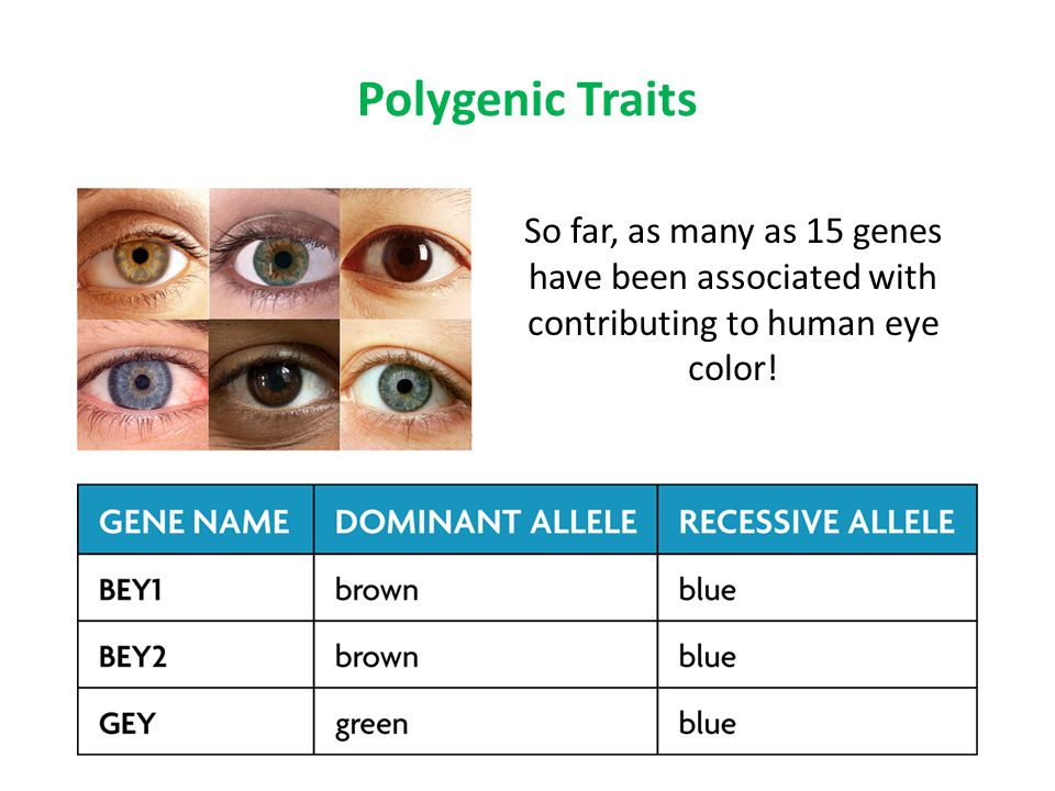 8 Polygenic Traits So far, as many as 15 genes have been associated with  contributing to human eye color!