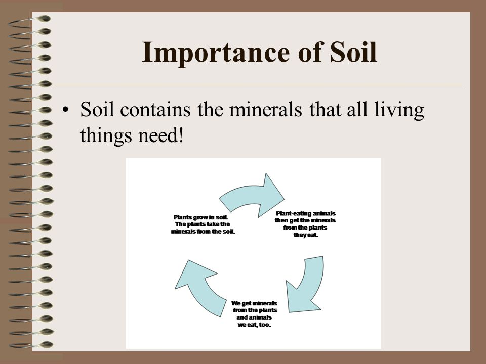 Soil ppt video online download for Is soil living