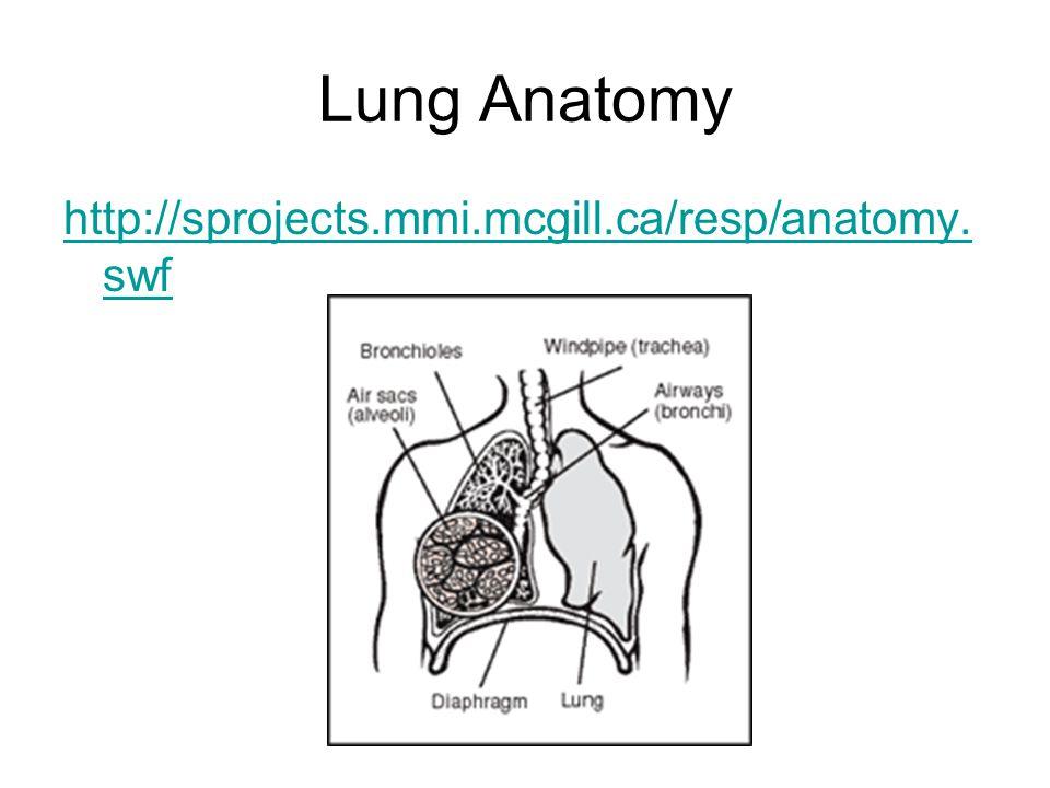 Lung Airways Anatomy Images - human body anatomy