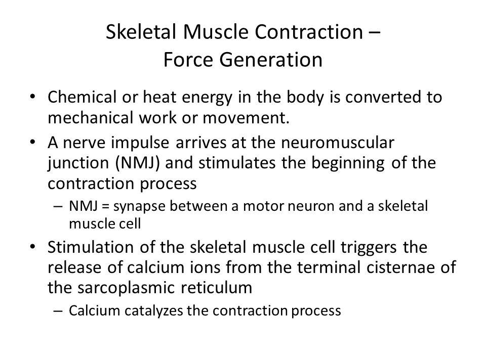 Skeletal Muscle Structure – Molecular Level - ppt download