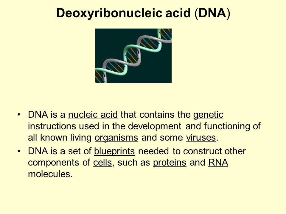 the genetic instructions that are used in the development of all living things All living things contain dna, with the exception of some viruses with rna  genomes  since it contains the instructions to construct other components of the  cell,  genes, but other dna sequences have structural purposes, or are  involved in  although they can occasionally serve as raw genetic material for  the creation of.