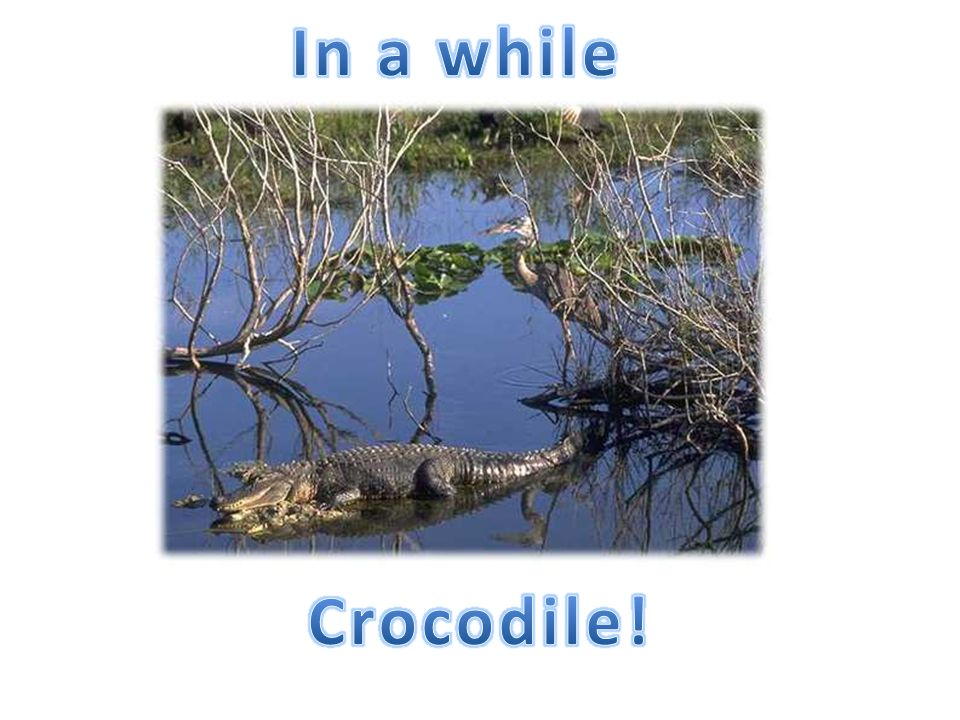 In a while Crocodile!