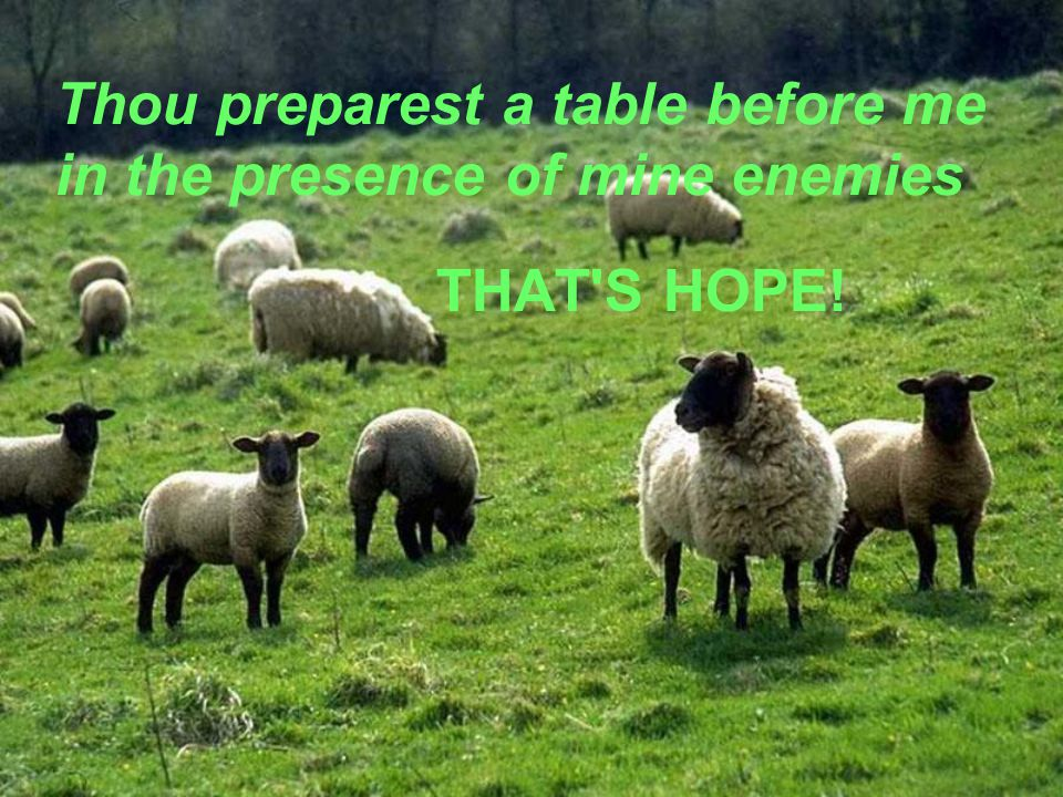13 Thou Preparest A Table Before Me In The Presence Of Mine Enemies