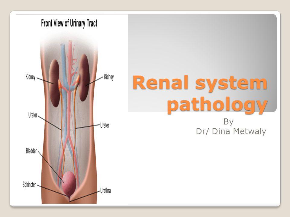 Renal system pathology - ppt video online download