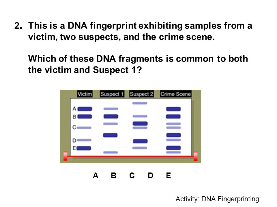 Dna Fingerprinting Worksheet Pbs Proga Info