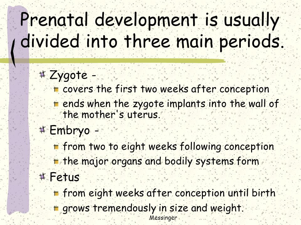 fetal development essay The casr in fetal lung development biology essay within the embryo, the lungs are filled with fluid secreted from cells in the lung epithelial tissue into the.