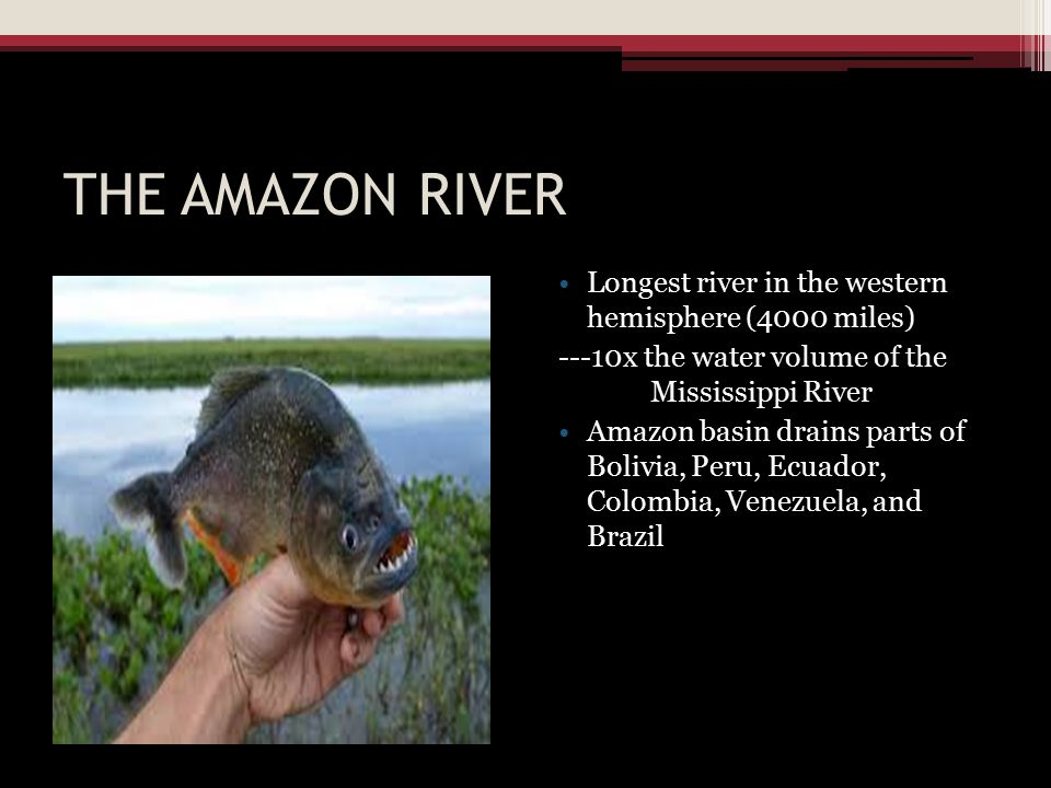 THE AMAZON RIVER Longest river in the western hemisphere (4000 miles)