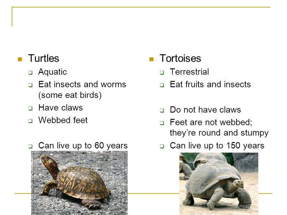 Reptiles Section ppt video online download