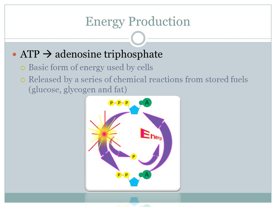 adenosine triphosphate atp essay Atp synthase is an enzyme that creates the energy storage molecule adenosine triphosphate (atp) atp is the most commonly used energy currency of cells for most organisms it is formed from adenosine diphosphate (adp) and inorganic phosphate (p i)the overall reaction catalyzed by atp synthase is.
