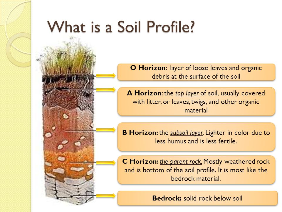 The nature of soil essential question ppt video online for Soil profile video