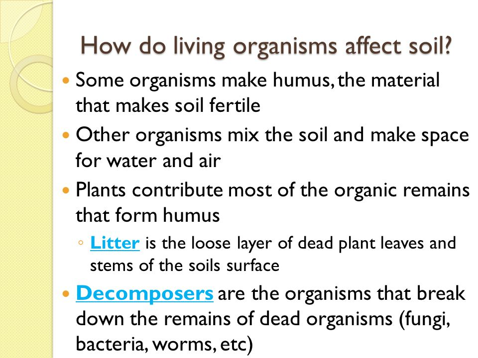 The Nature of Soil Essential Question: - ppt video online download