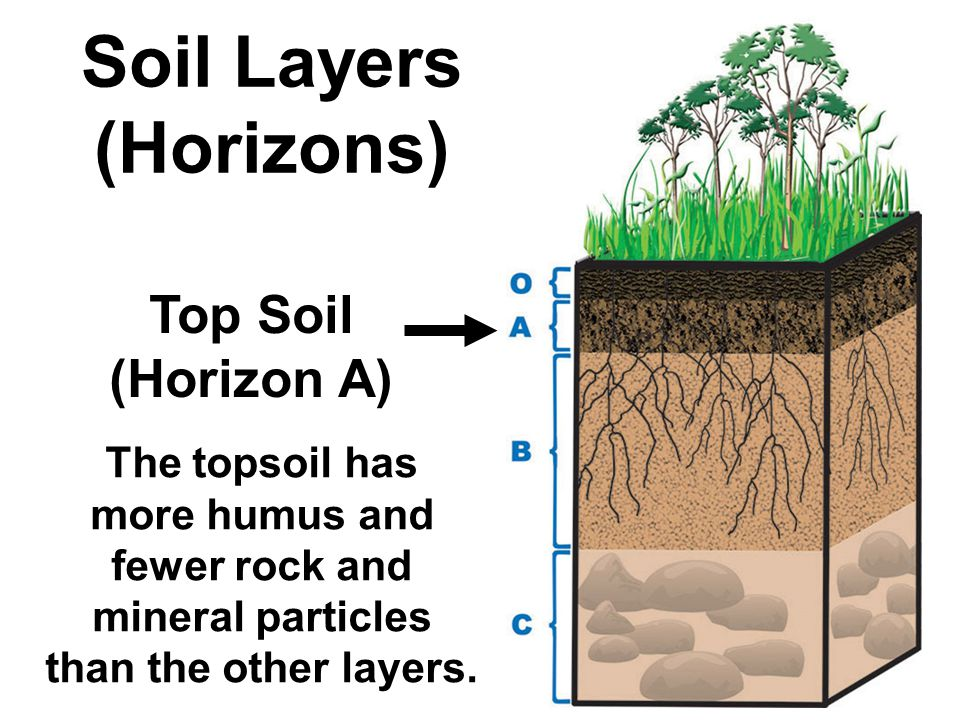 What is the composition of soil ppt video online download for Top layer of soil
