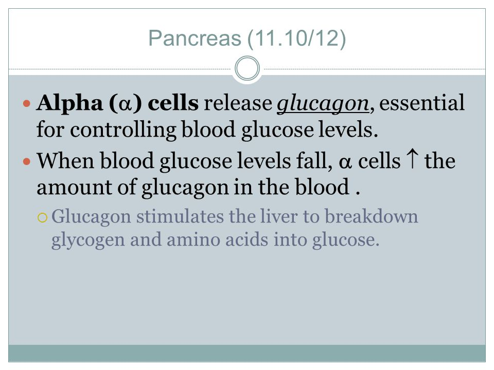 Pancreas (11.10/12) Alpha () cells release glucagon, essential for controlling blood glucose levels.