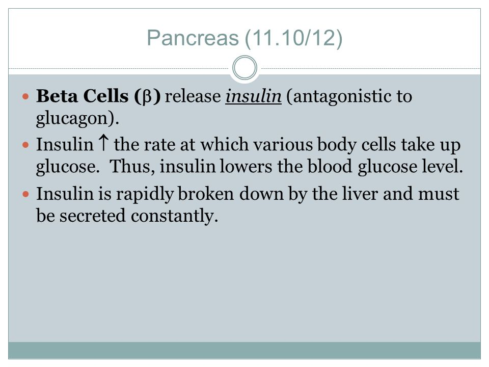 Pancreas (11.10/12) Beta Cells () release insulin (antagonistic to glucagon).