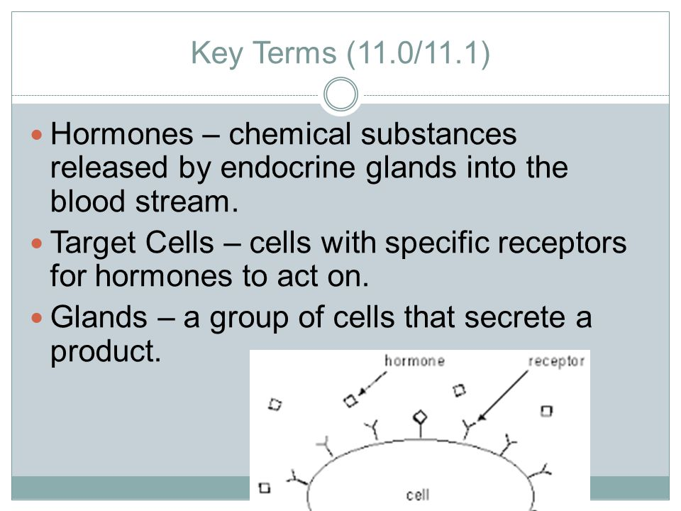 Key Terms (11.0/11.1) Hormones – chemical substances released by endocrine glands into the blood stream.