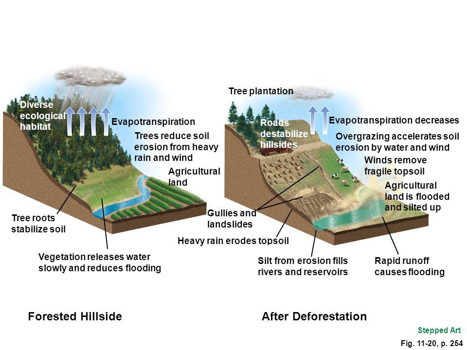 Forested Hillside After Deforestation Diverse ecological habitat