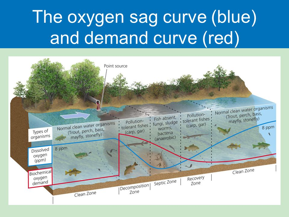 The oxygen sag curve (blue) and demand curve (red)