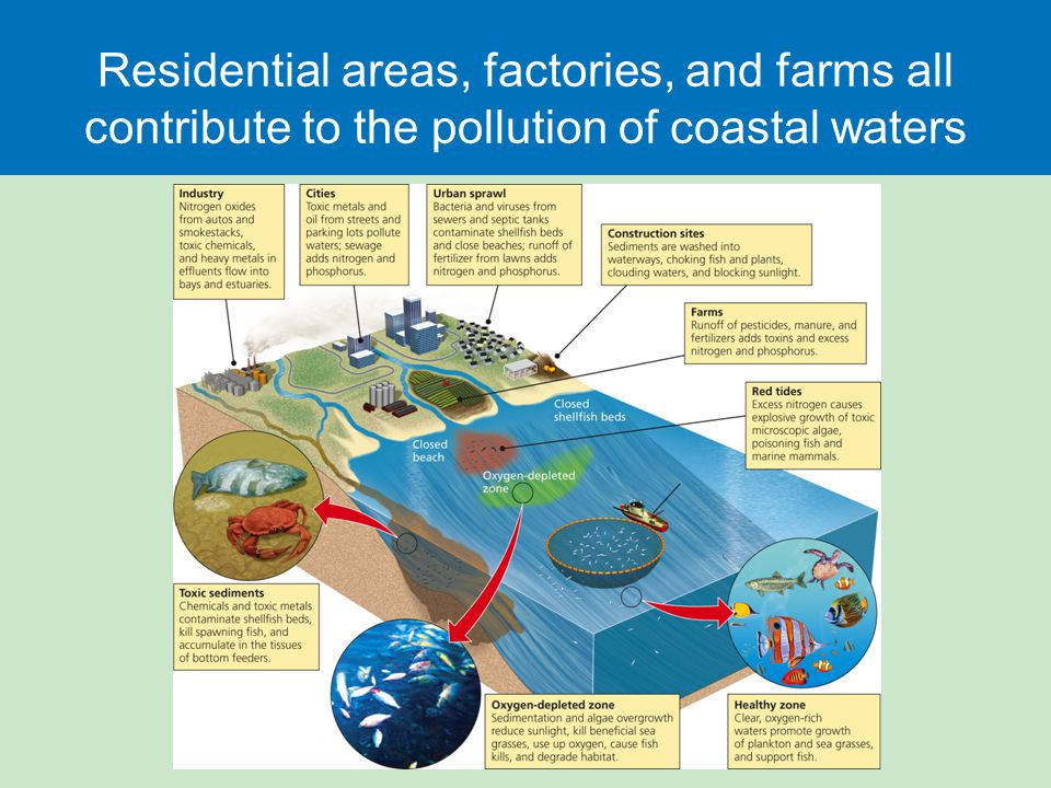 Residential areas, factories, and farms all contribute to the pollution of coastal waters