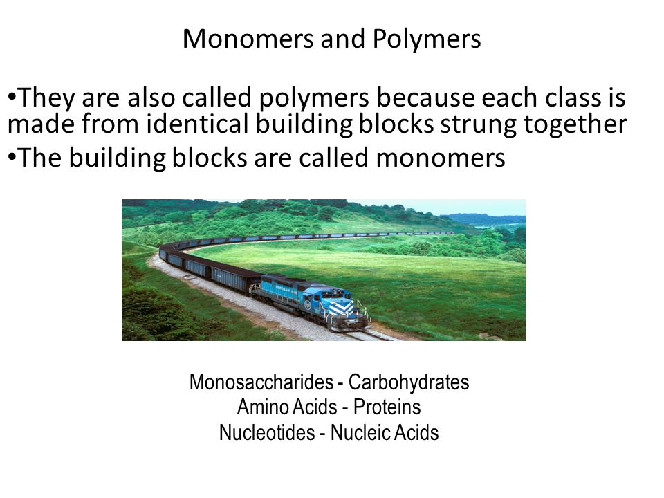 The building blocks are called monomers