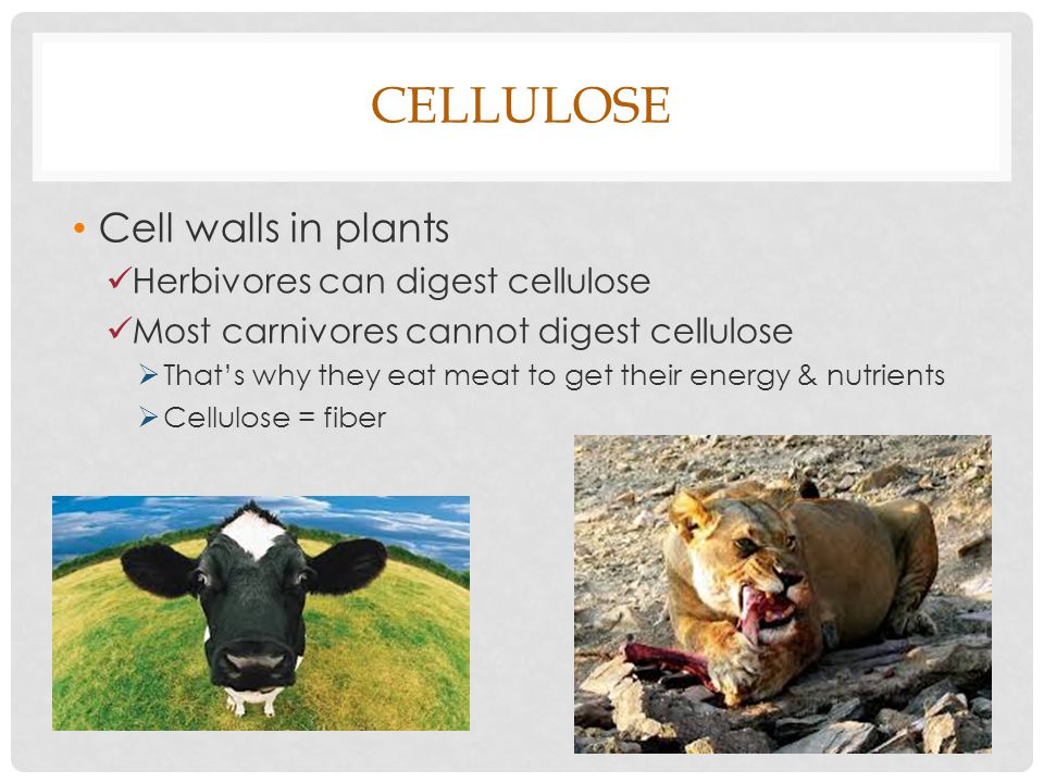Carbohydrates - Cellulose