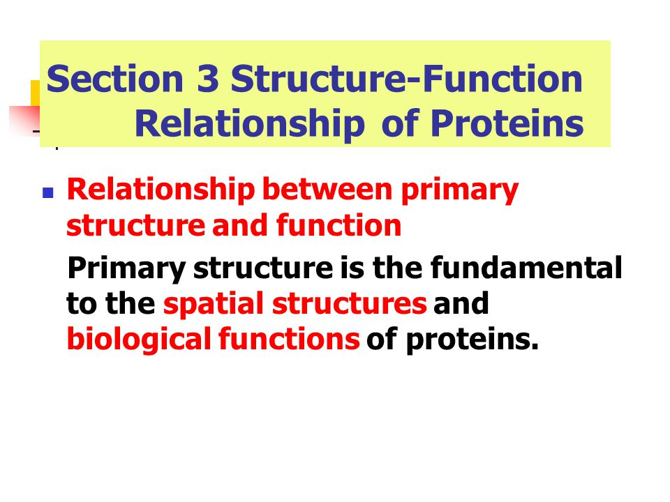 the structure and function of proteins biology essay Cells are small compartments that hold the biological equipment necessary to  keep  a protein is an example of a macromolecule while a mitochondrion is an .