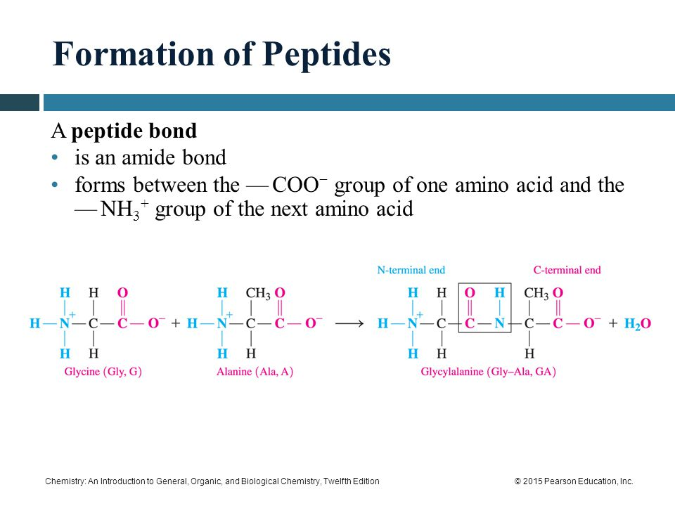 163 proteins primary structure ppt video online download