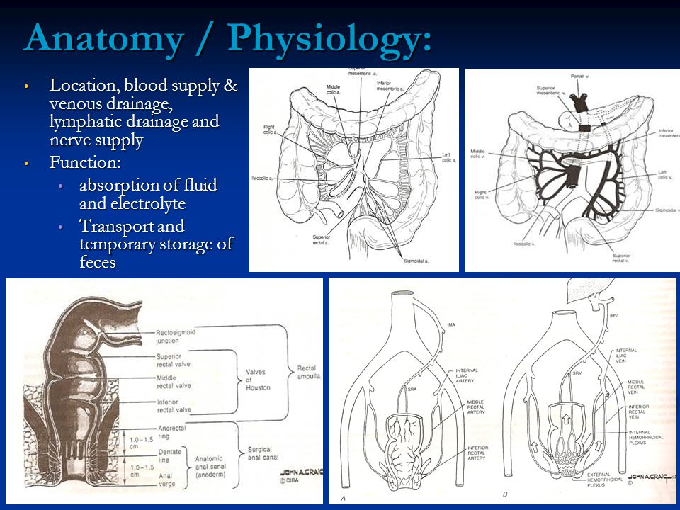 Anatomy / Physiology: Location, blood supply & venous drainage, lymphatic drainage and nerve supply.