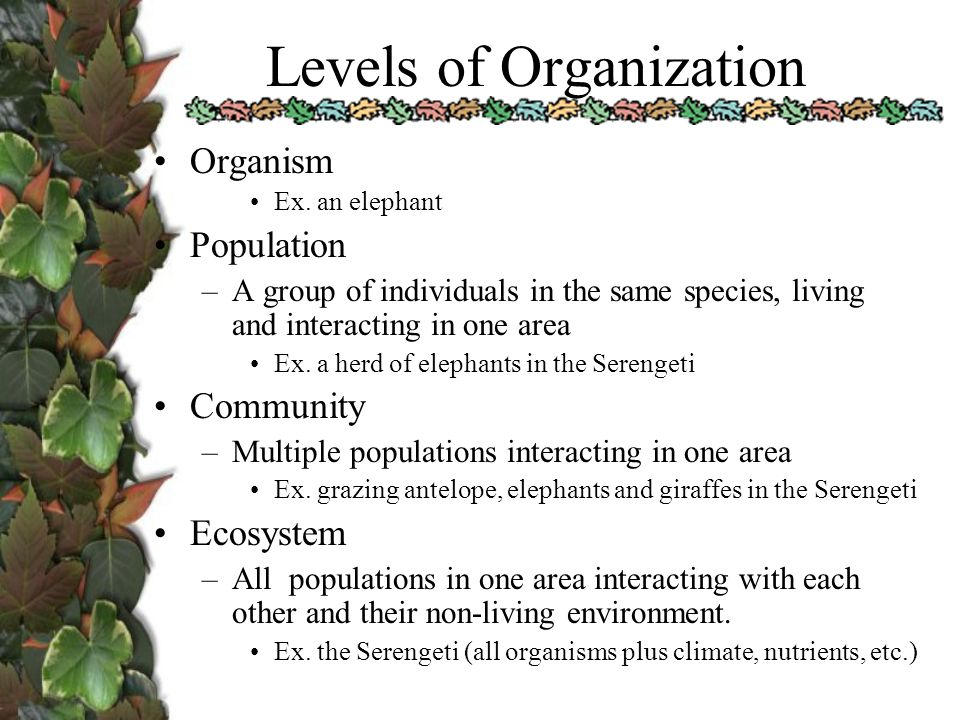Ecology 1 Ecosystems ppt download – Levels of Organization Worksheet