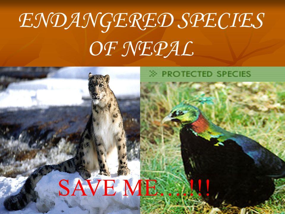 endangered species ppt video online shop