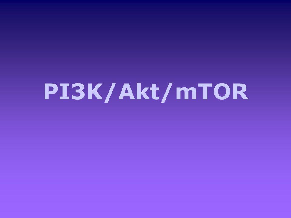 PI3K/Akt/mTOR