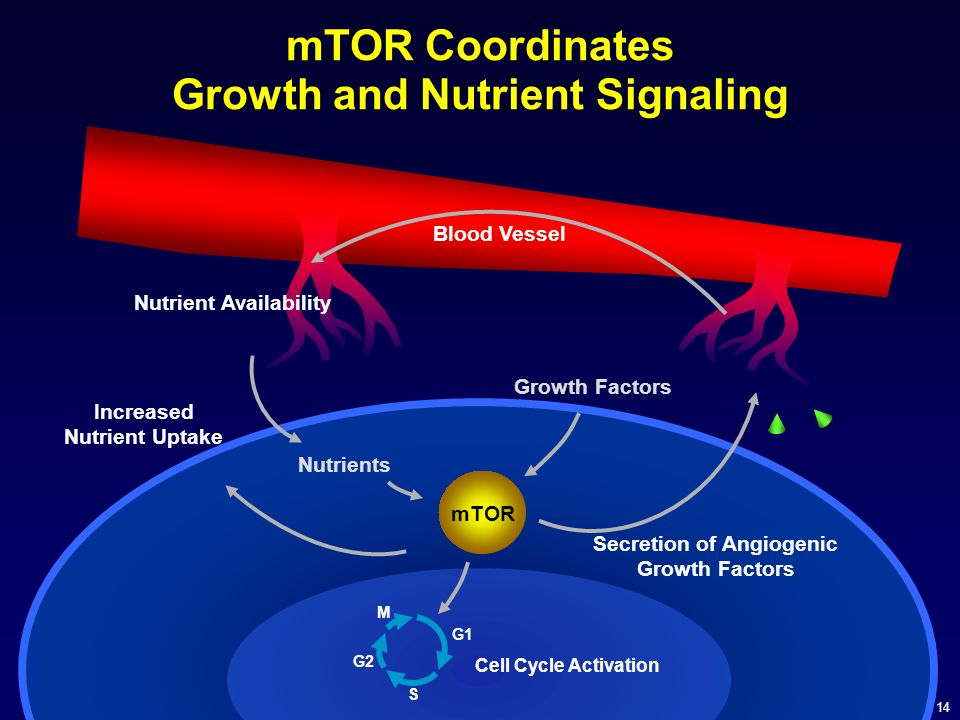 mTOR Coordinates Growth and Nutrient Signaling