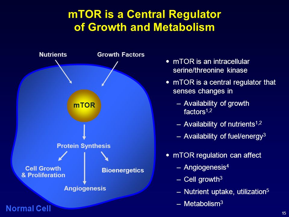 mTOR is a Central Regulator of Growth and Metabolism