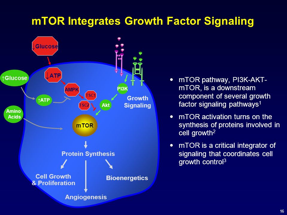 mTOR Integrates Growth Factor Signaling