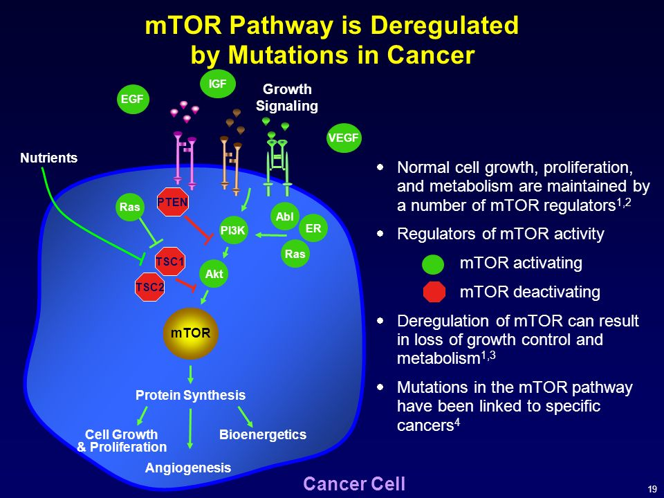 mTOR Pathway is Deregulated by Mutations in Cancer