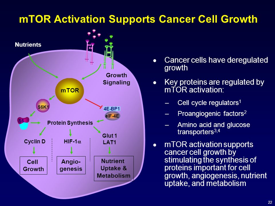 mTOR Activation Supports Cancer Cell Growth