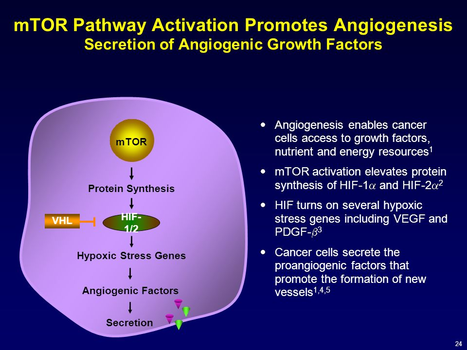 mTOR Pathway Activation Promotes Angiogenesis Secretion of Angiogenic Growth Factors
