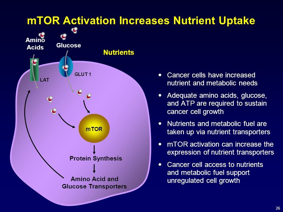 mTOR Activation Increases Nutrient Uptake