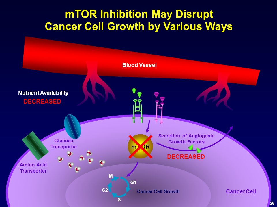 mTOR Inhibition May Disrupt Cancer Cell Growth by Various Ways