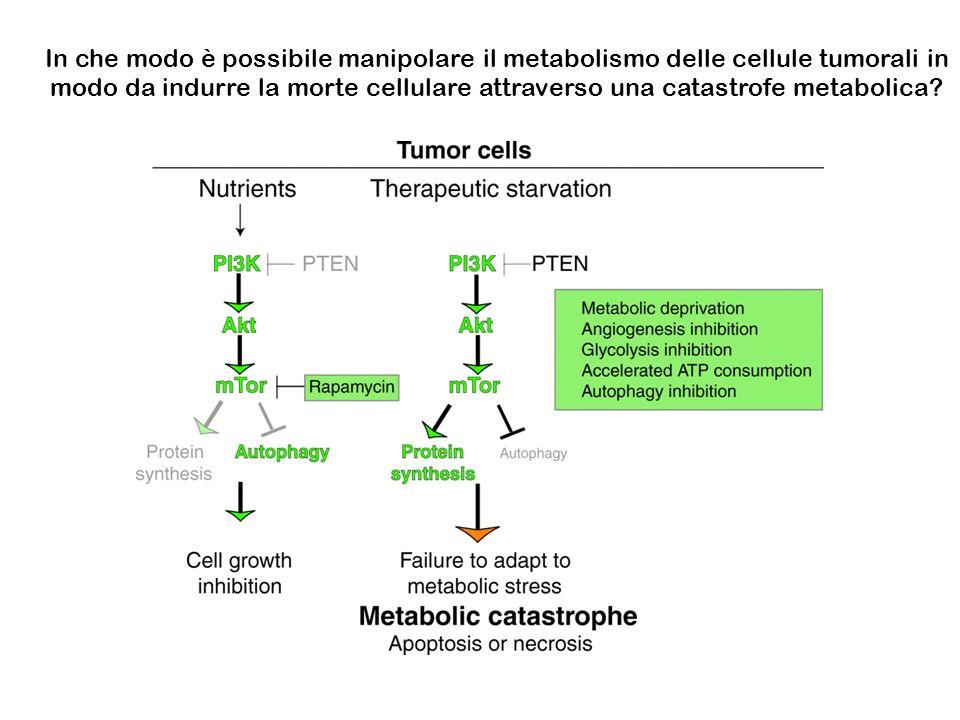 In che modo è possibile manipolare il metabolismo delle cellule tumorali in modo da indurre la morte cellulare attraverso una catastrofe metabolica