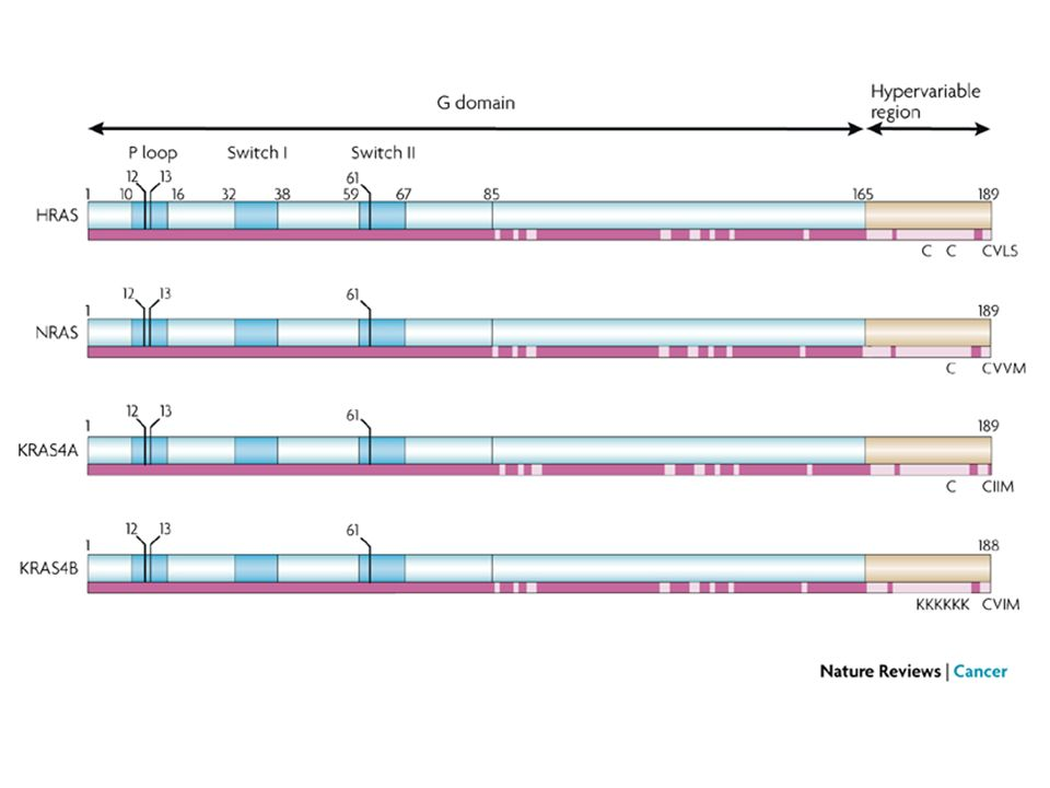 HRAS, NRAS, KRAS4A and KRAS4B are highly homologous throughout the G domain (amino acids 1–165).