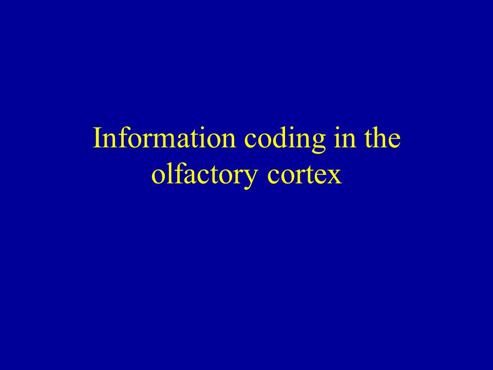 Information coding in the olfactory cortex