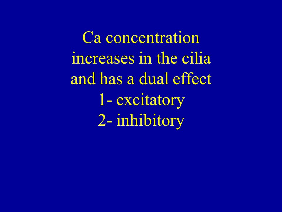 Ca concentration increases in the cilia and has a dual effect 1- excitatory 2- inhibitory