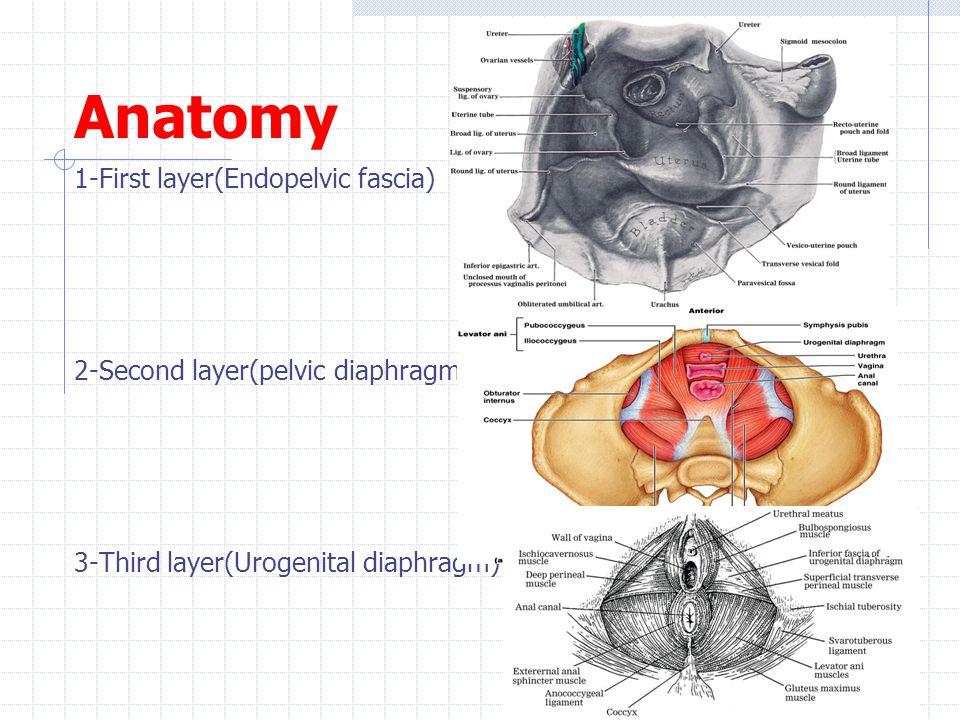 Ausgezeichnet Kamelspinne Anatomie Galerie - Anatomie Ideen ...