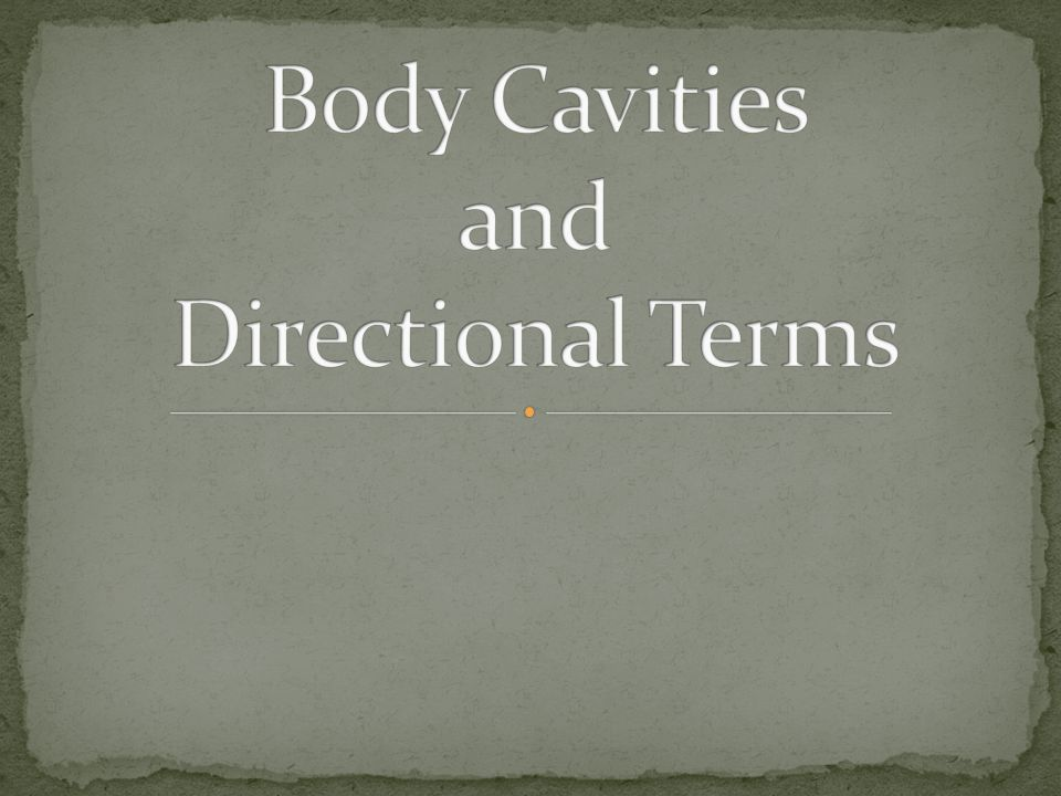 Body Cavities and Directional Terms