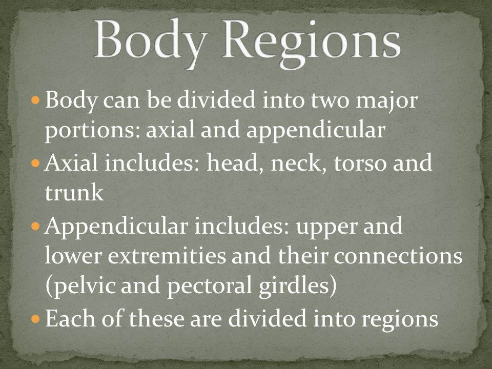 Body Regions Body can be divided into two major portions: axial and appendicular. Axial includes: head, neck, torso and trunk.