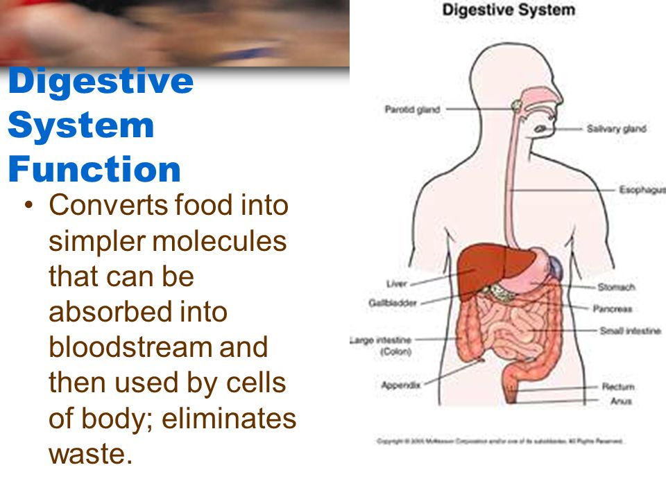 digestive functiondysfunction essay How aging affects your digestive health many bodily functions slow down, including your digestive tract — it if you want to keep your digestive tract in.