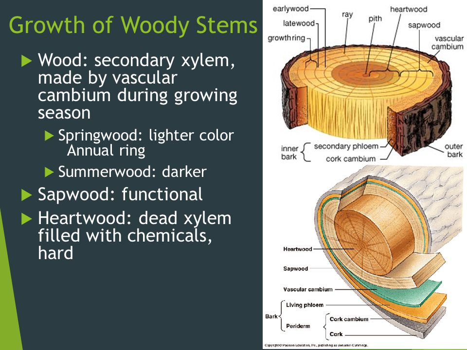 13b 3 roots not always underground anchor the plant ppt video 14 growth ccuart Images